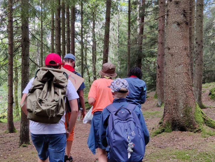 Scouter som går en i tallskog