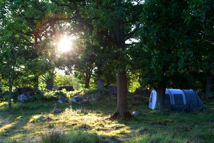 Talt-i-skogsglanta-med-morgonsol-428x286px